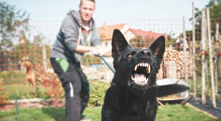 Learn How To Control A Dogs Barking And Make It Calm And Composed