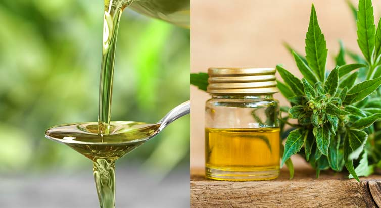 The Difference Between Hemp Oil Or CBD