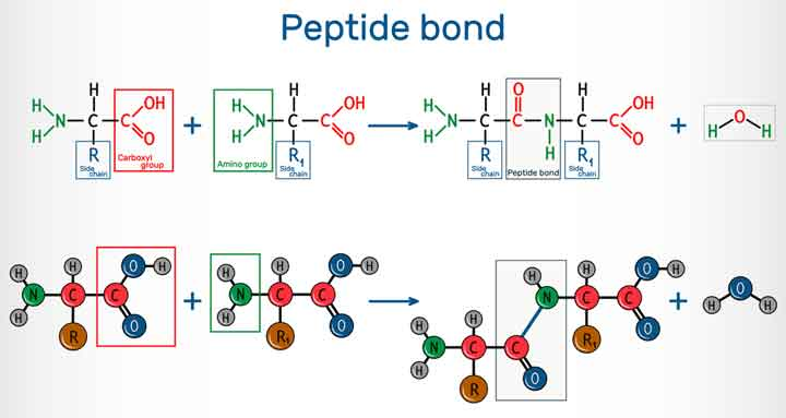 The Early Chemistry of Peptides, Purines, and Sugars