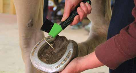 Clean the Horse's Hoof