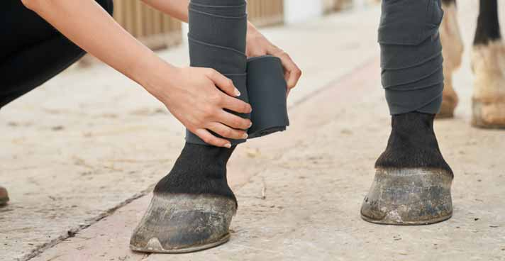 How to Bandage a Horse's Injured Hoof