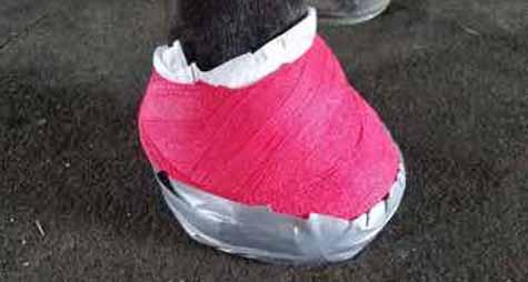 Wrap the Hoof